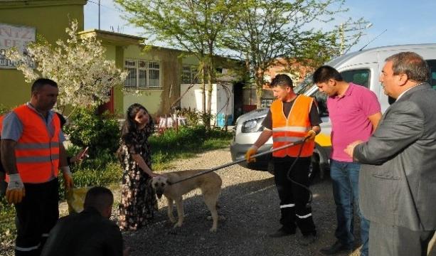 Konya'da Silahla vurulan köpek tedavisinin ardından doğal ortamına bırakıldı