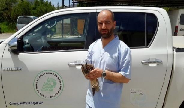 Konya'da Hastane bahçesinde yaralı bulunan Puhu Kuşu koruma altına alındı