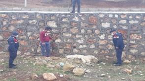 Konya'nın Güneysınır ilçesinde Sokak köpeklerini öldüren kişi yakalandı -Tıkla izle