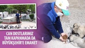 Can Dostlarımız Tam Kapanmada da Büyükşehir'e Emanet