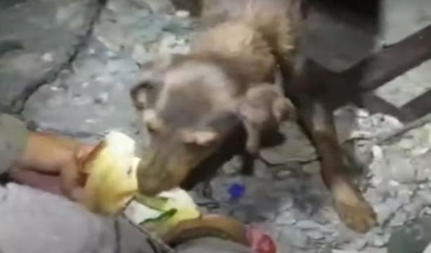 Yangın Bölgesinde Mahsur Kalan Köpek ve Yavruları Kurtarıldı