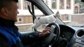 Zabıta köpeğin kovaladığı kediyi ağaçtan indirip sahibine teslim etti