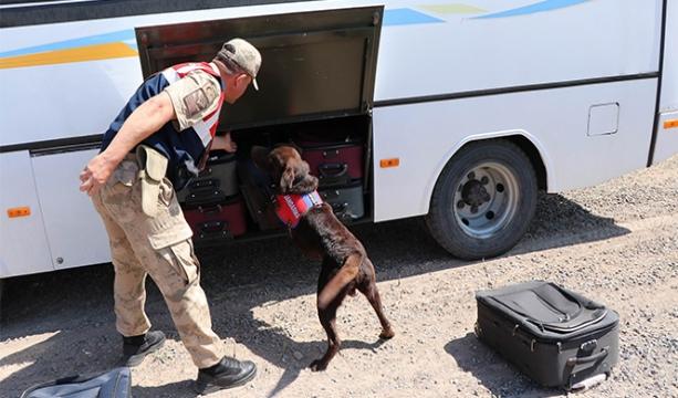 Bu köpekler Mehmetçiğin en büyük yardımcısı - Tıkla İzle