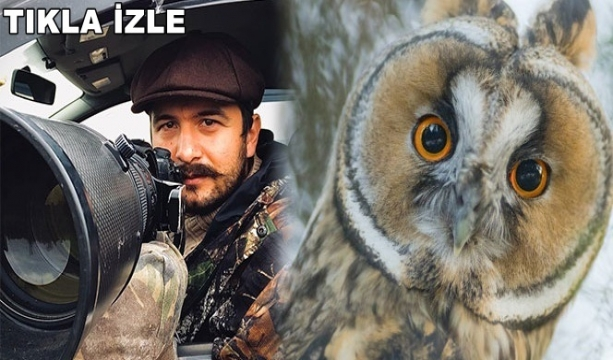 Doğa fotoğrafçısının hazırladığı yaban hayatı klibi beğeni topladı